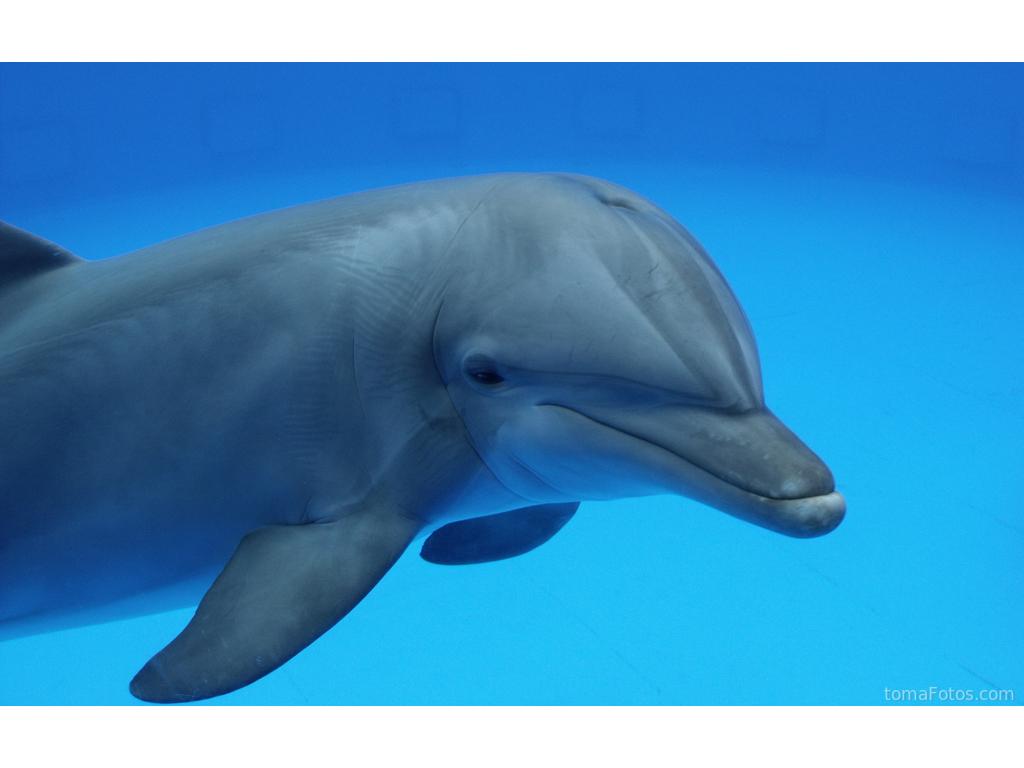 Un delfín nos saluda