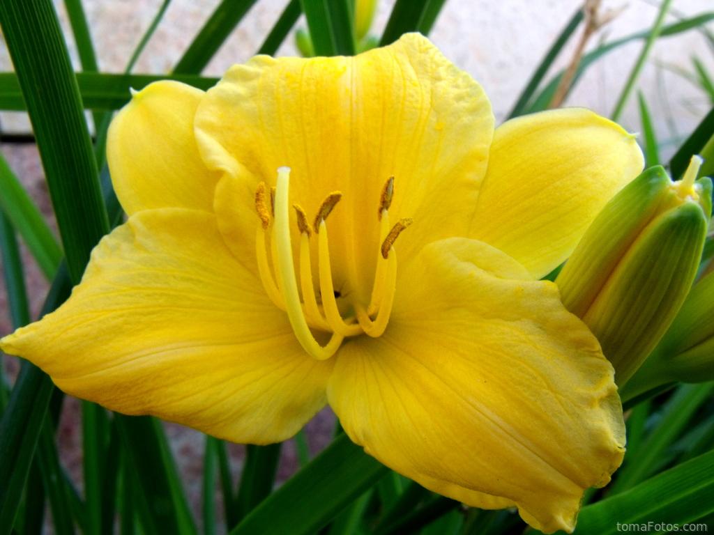 Una gran flor amarilla